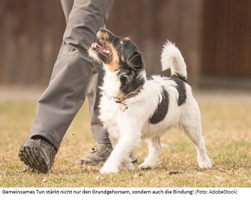 Terrier im Gehorsam