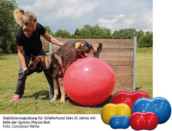 Schäferhund auf Gymnic Rolls