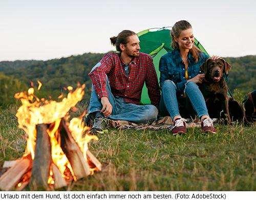 Zelten und Lagerfeuer mit Hund