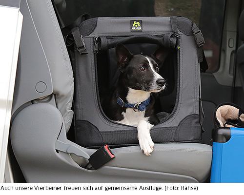 Hunde reisen im Auto sicherer in einer Box