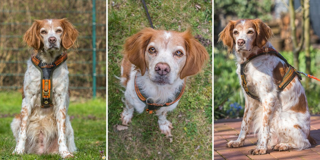 hund mit niggelog follow 3 collage