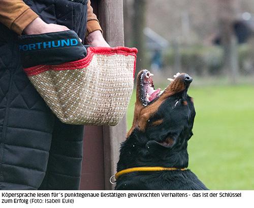 """Rottweiler beim """"Stellen und Verbellen"""""""