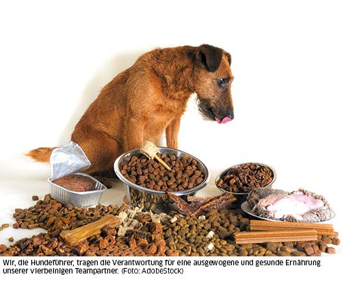 Hund sitzt im Futterhaufen