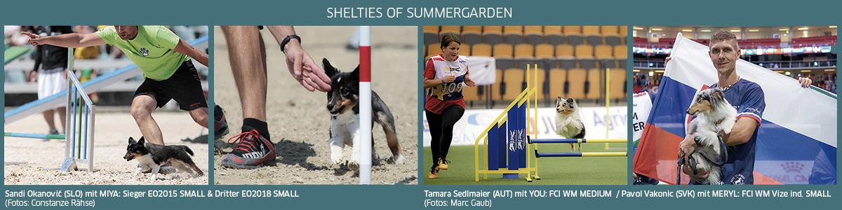 erfolgreiche Shelties of Summergarden