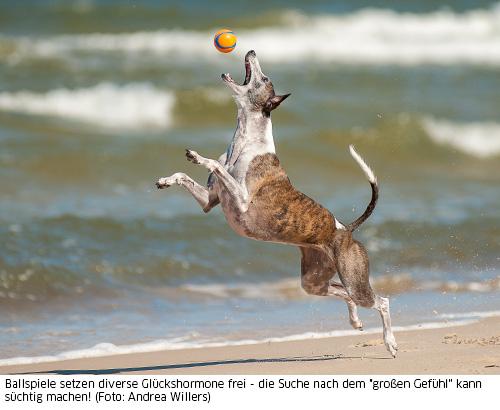 Hund jagd seinen Ball