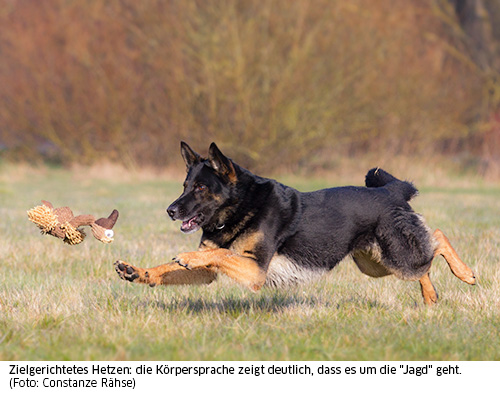 Hund jagd Spielzeug
